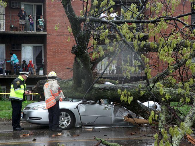 Falling tree kills Ohio woman