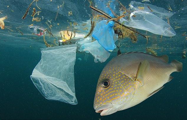 Microplastic In Human Organism