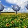 Solar sunflower inspired