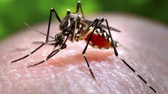 Zika menace